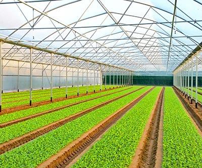 Europrogress vendita e produzione di serre agricole for Serre agricole usate in vendita