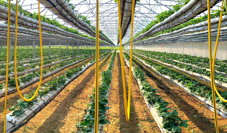 Europrogress - Impiantisica di serre agricole