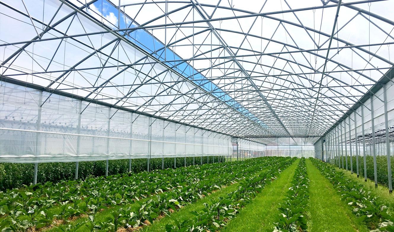 Europrogress - Serra con coltivazioni